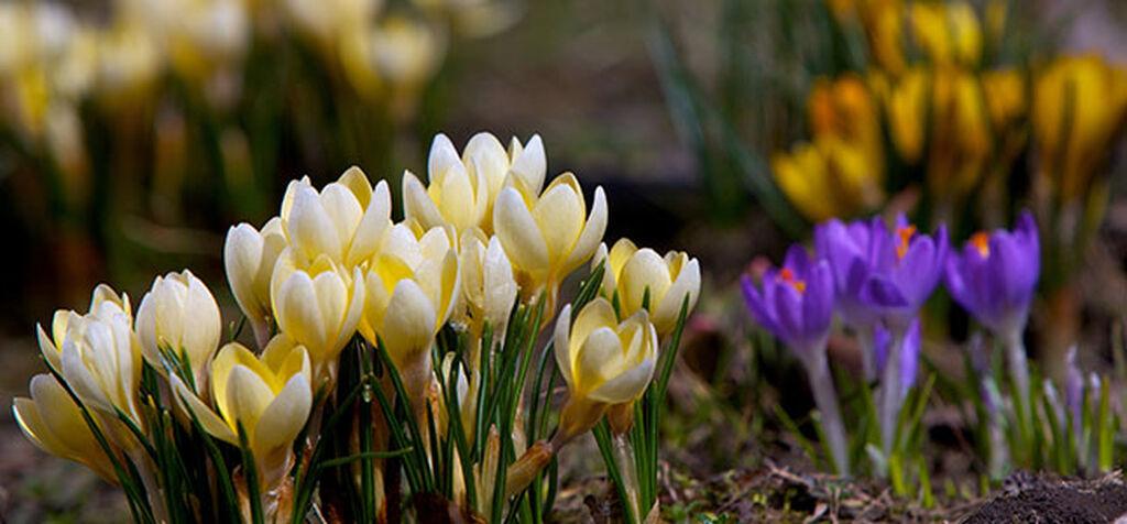 Kevät on täällä - nämä voit tehdä nyt