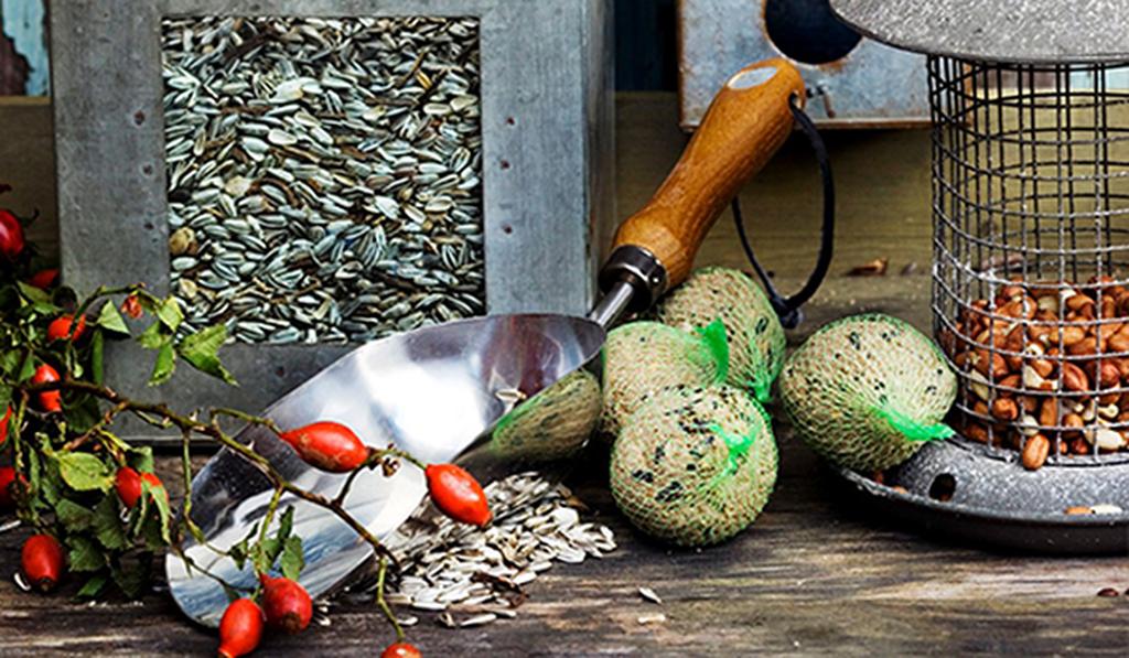 Lintujen ruokinta - näin onnistut