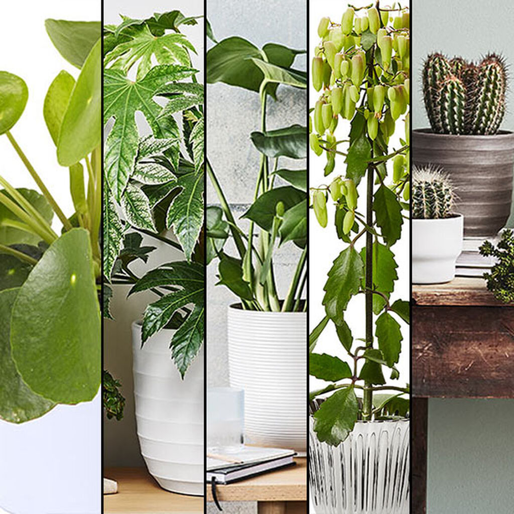 Neljä trendikkäintä kasvia vuonna 2016