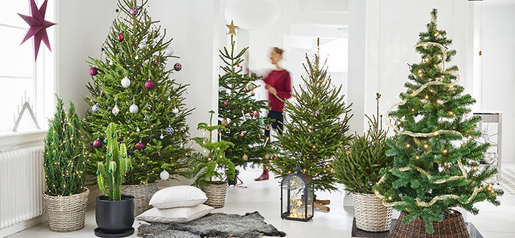 Vinkkejä joulukuusen hoitoon