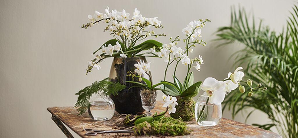 Vinkkejä orkideojen asetteluun