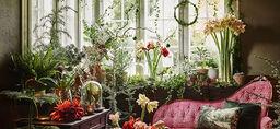 Adventtikoristelua kasveilla