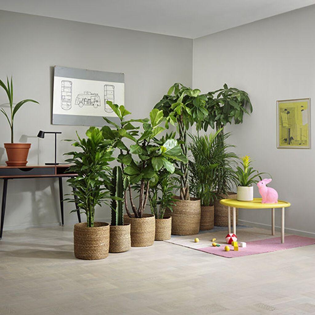 Kasvit tilanjakajina
