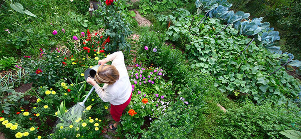 Vinkit puutarhan suunnitteluun ja perustamiseen