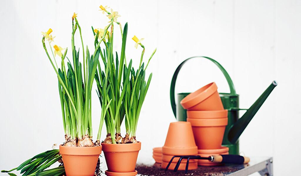 Narsissit – näin onnistut