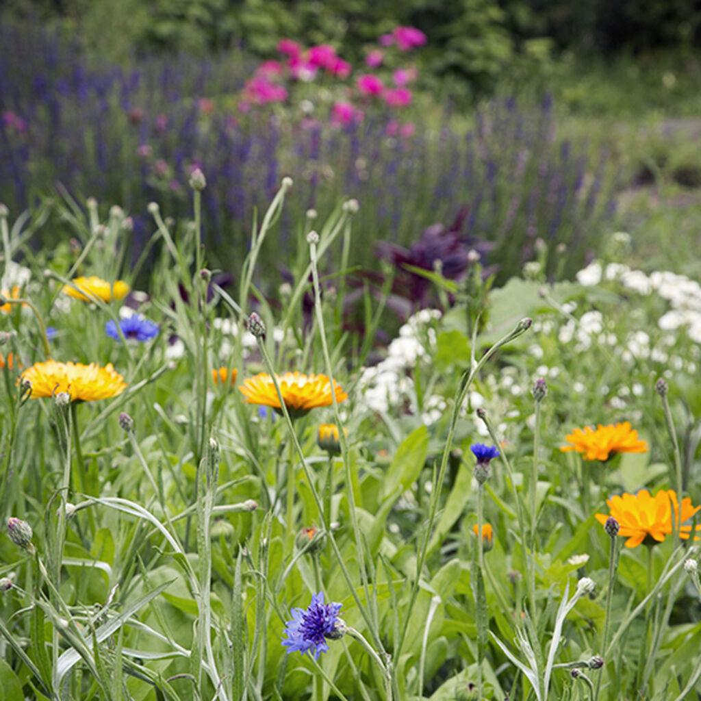 Kaksi valmiiksi värisommiteltua kukkapenkkiä puutarhaasi