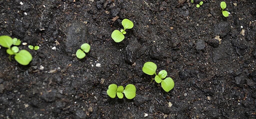 Mikroelämää - puutarhan pienimmät apurit