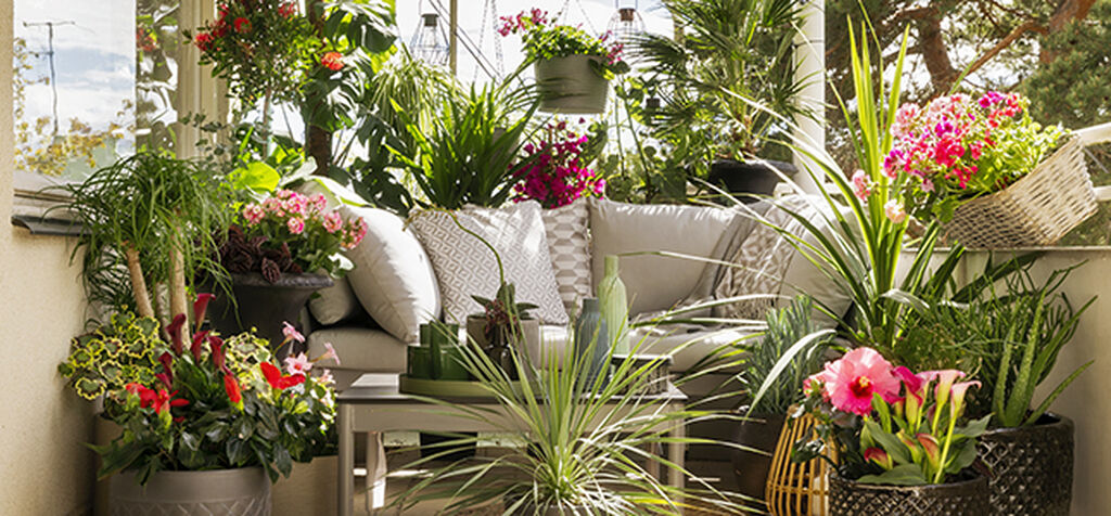 Huomioi nämä seikat ruukkukasveja siirtäessäsi