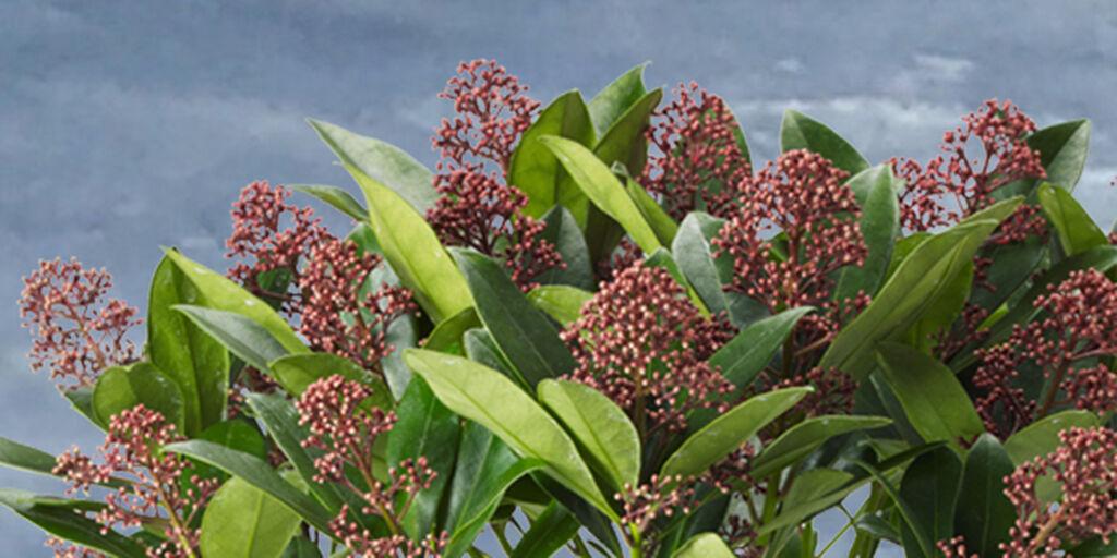 Viisi parasta kylmää kestävää kasvia
