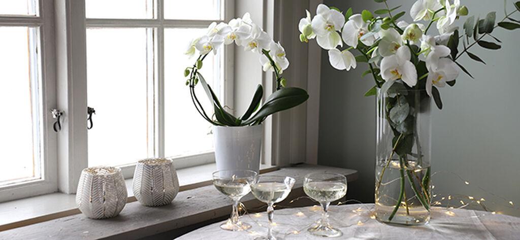 Ylväs orkidea vai kaunis kukkakimppu uudenvuoden juhliin