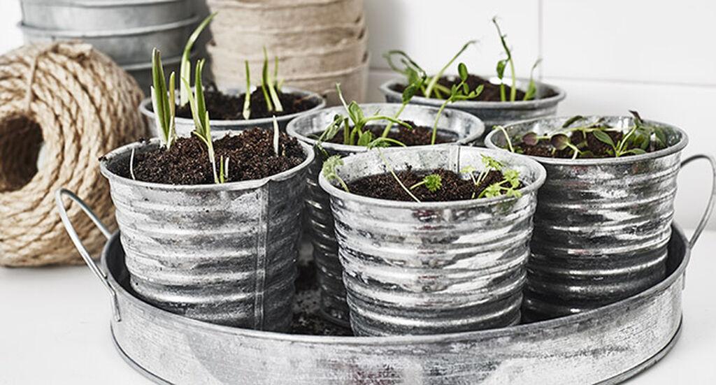 Maaliskuu – taimikylvöjen aika alkaa