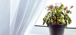 Näin saat kasvit selviytymään hengissä lomamatkan ajan