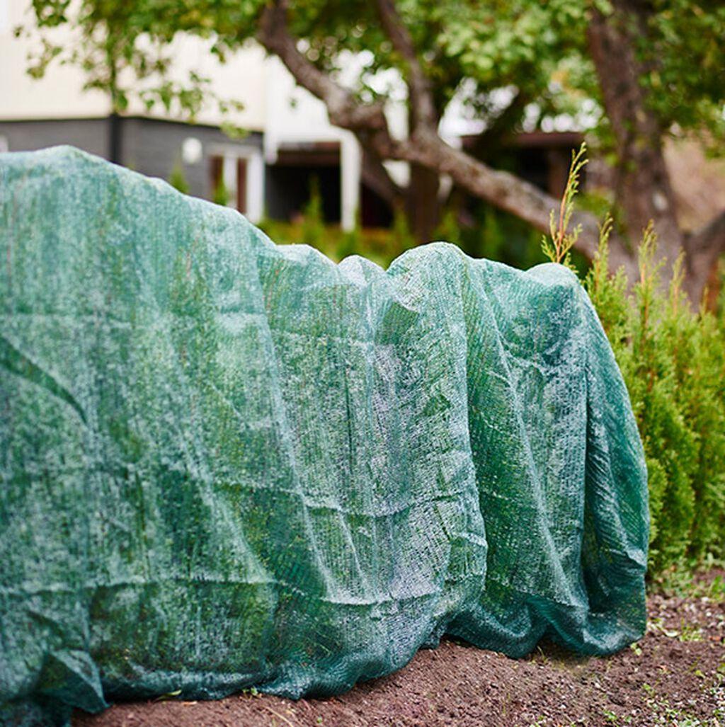 Kasvien suojaaminen talveksi