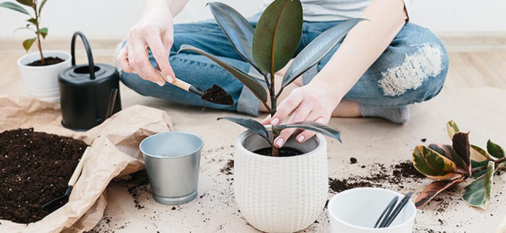 Näin onnistut uuden kasvin kanssa