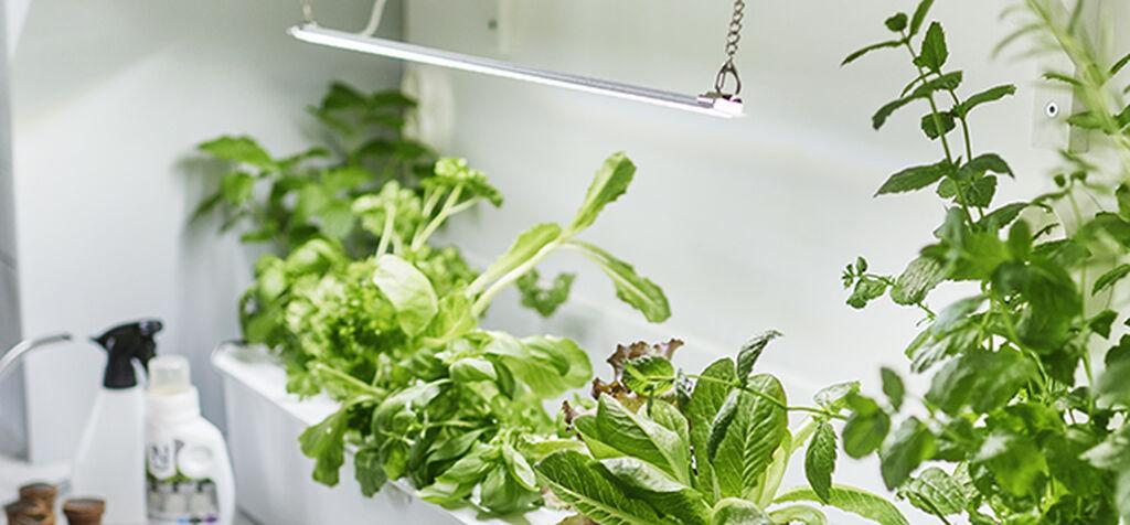 Kasvivalaisimilla luot vehreyttä ja saat satoa ympäri vuoden