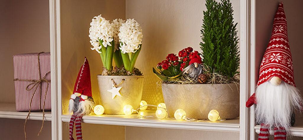 Omannäköinen jouluasetelma syntyy kukista