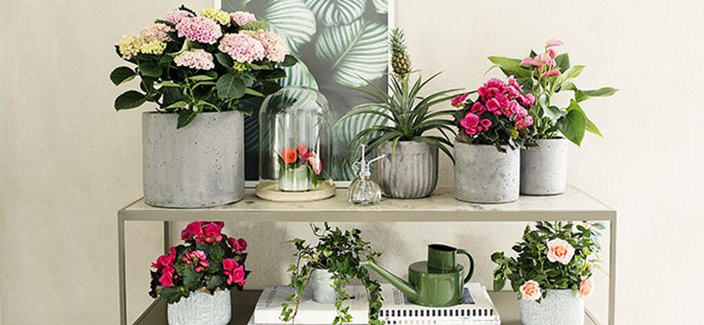 Sisusta kotisi kukkivilla kasveilla
