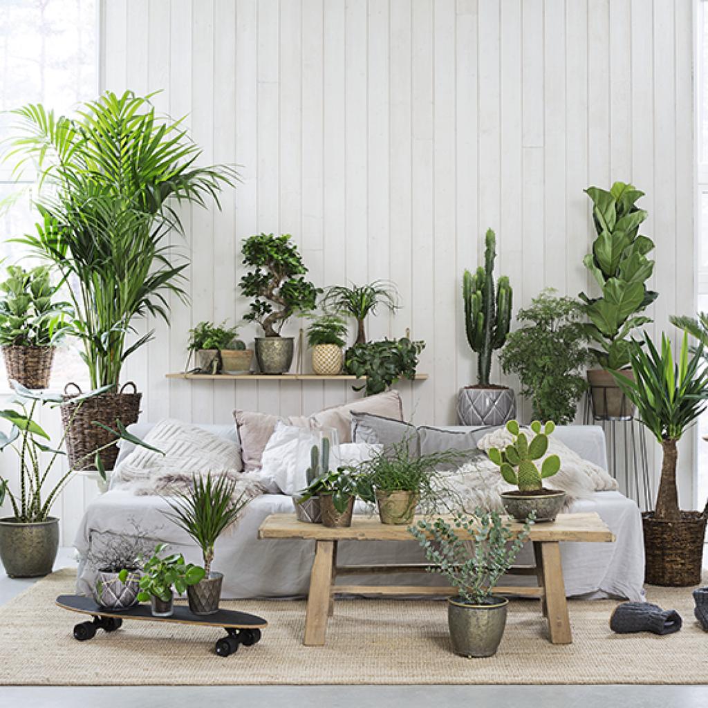 Viisi tapaa lisätä kasvin hyvinvointia