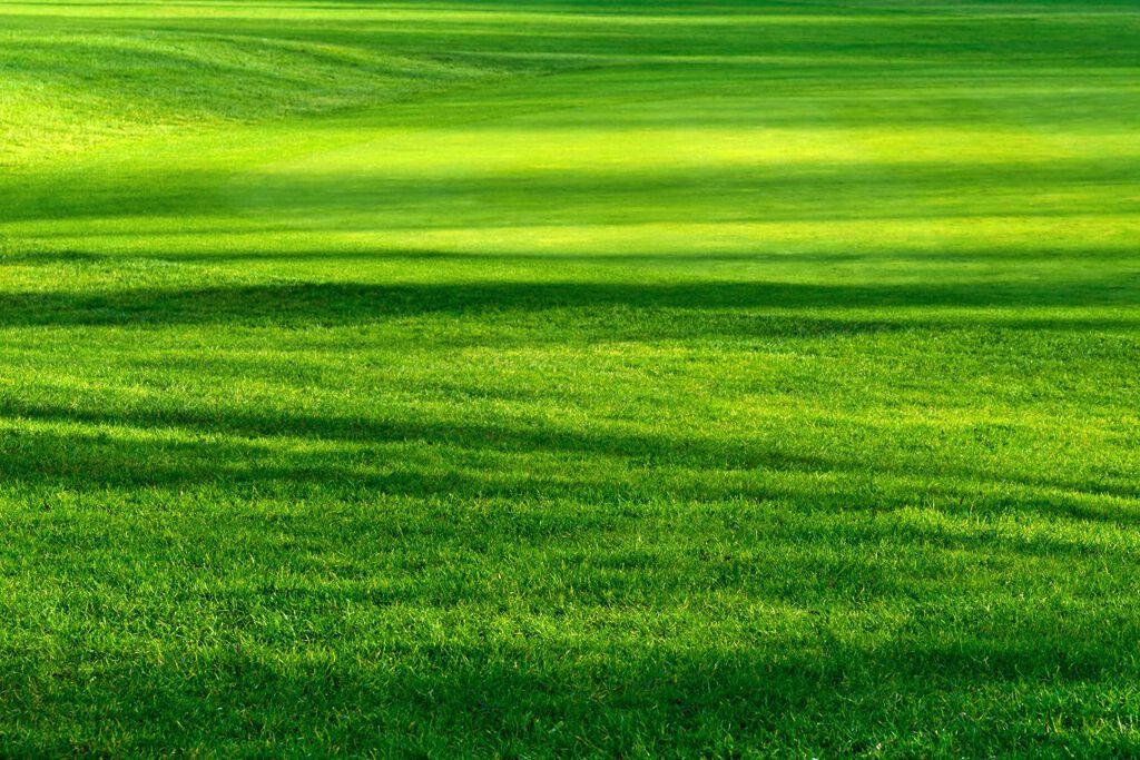 Näin saat kauniin nurmikon