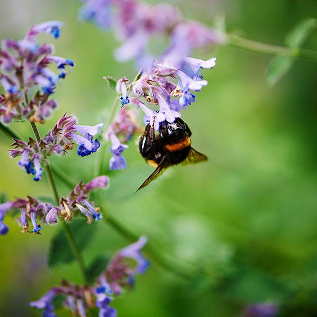 Pieni puutarha – vinkkejä ja neuvoja