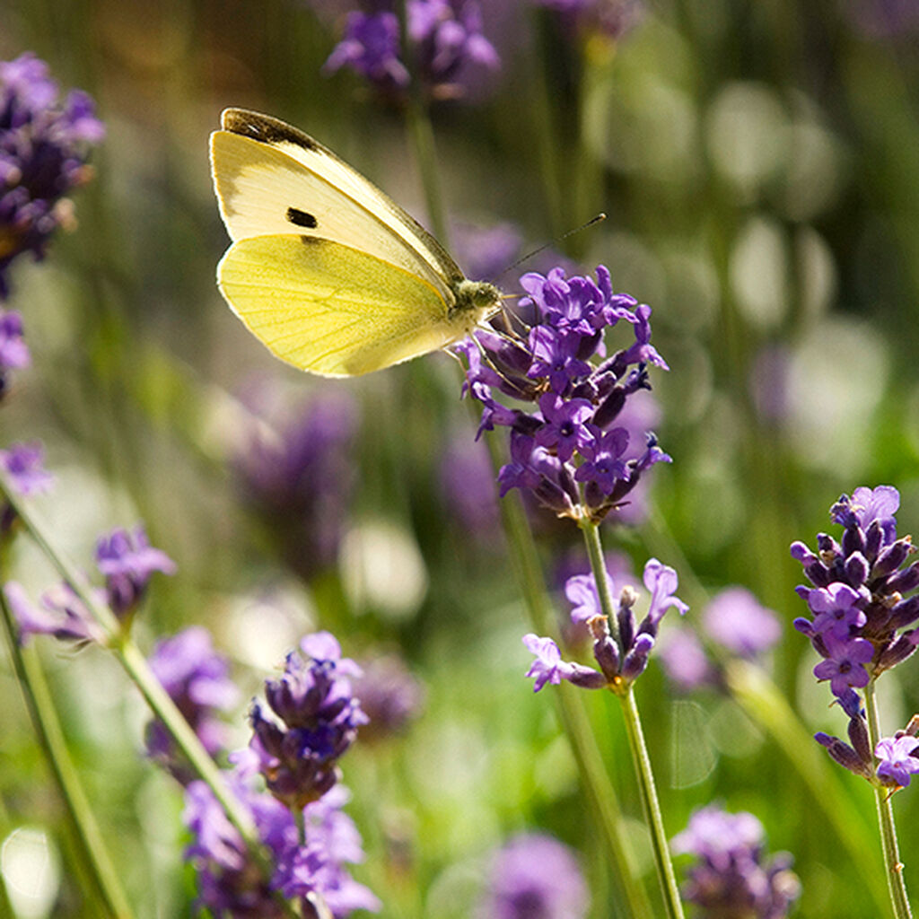 Kutsu mesipistiäiset ja muut hyödylliset hyönteiset puutarhaan