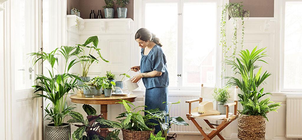 Löydä sopivat ravinteet huonekasveillesi