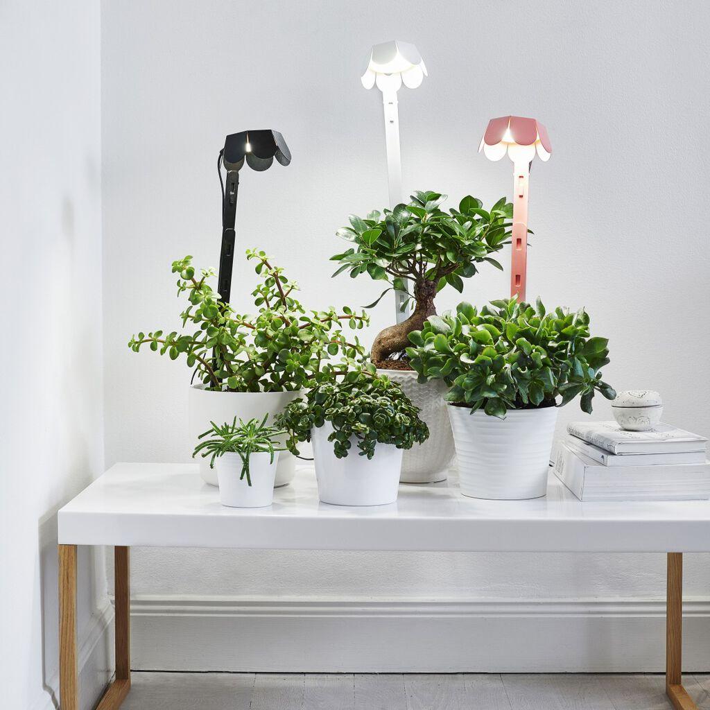 Huonekasvien kasvivalaisimet tarjoavat vehreyttä ympäri vuoden