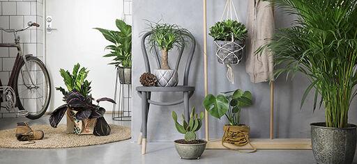 Helppohoitoiset Kasvit