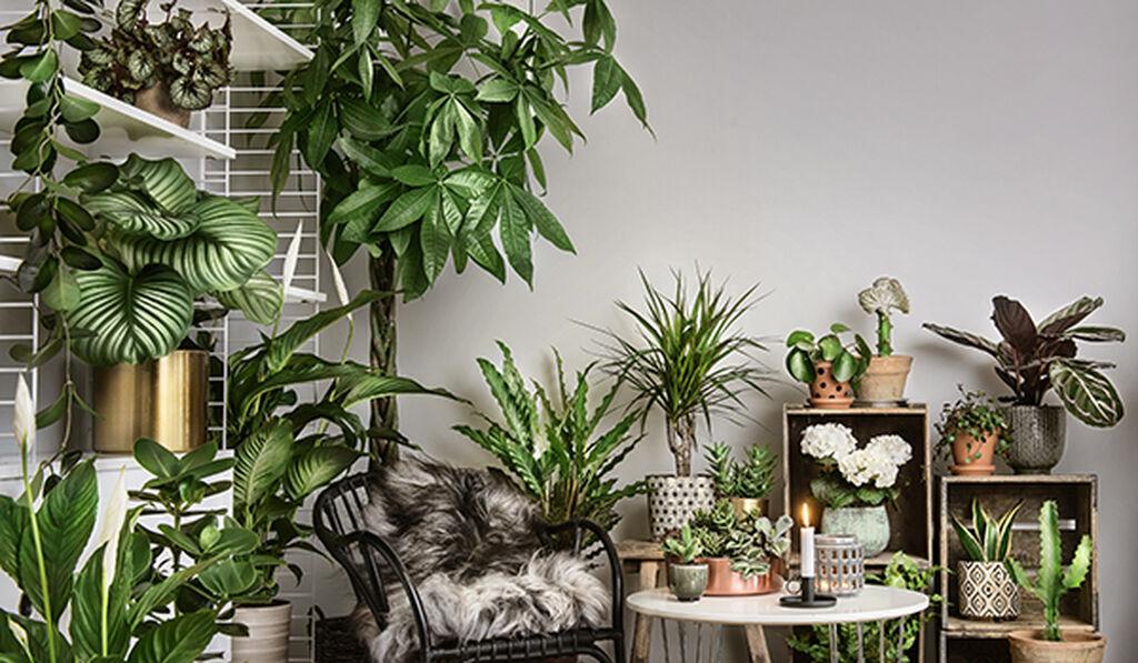 Vinkkejä huonekasvien hoitoon