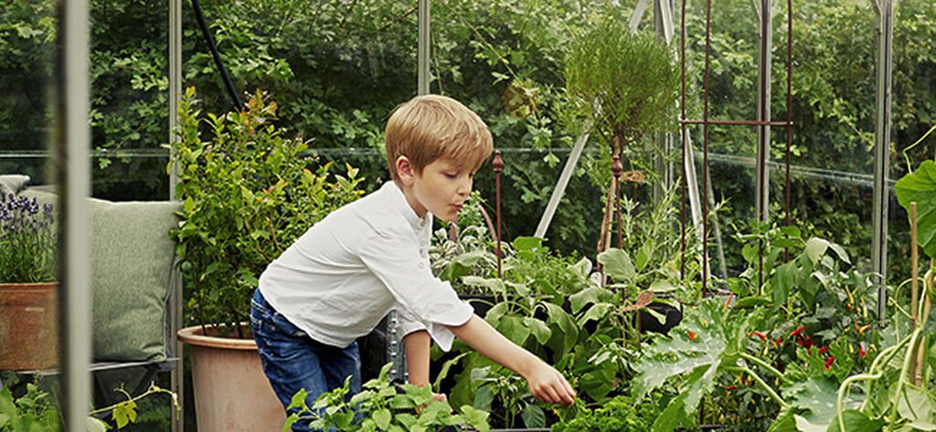 Kasvihuone – kaikki mitä sinun tarvitsee tietää
