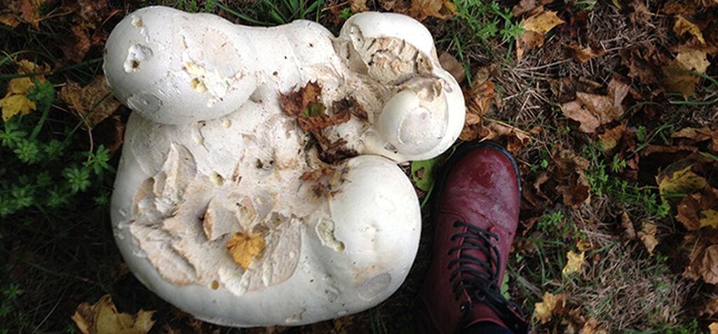 Sienet – kasvimaailman korvaamattomat taustajoukot