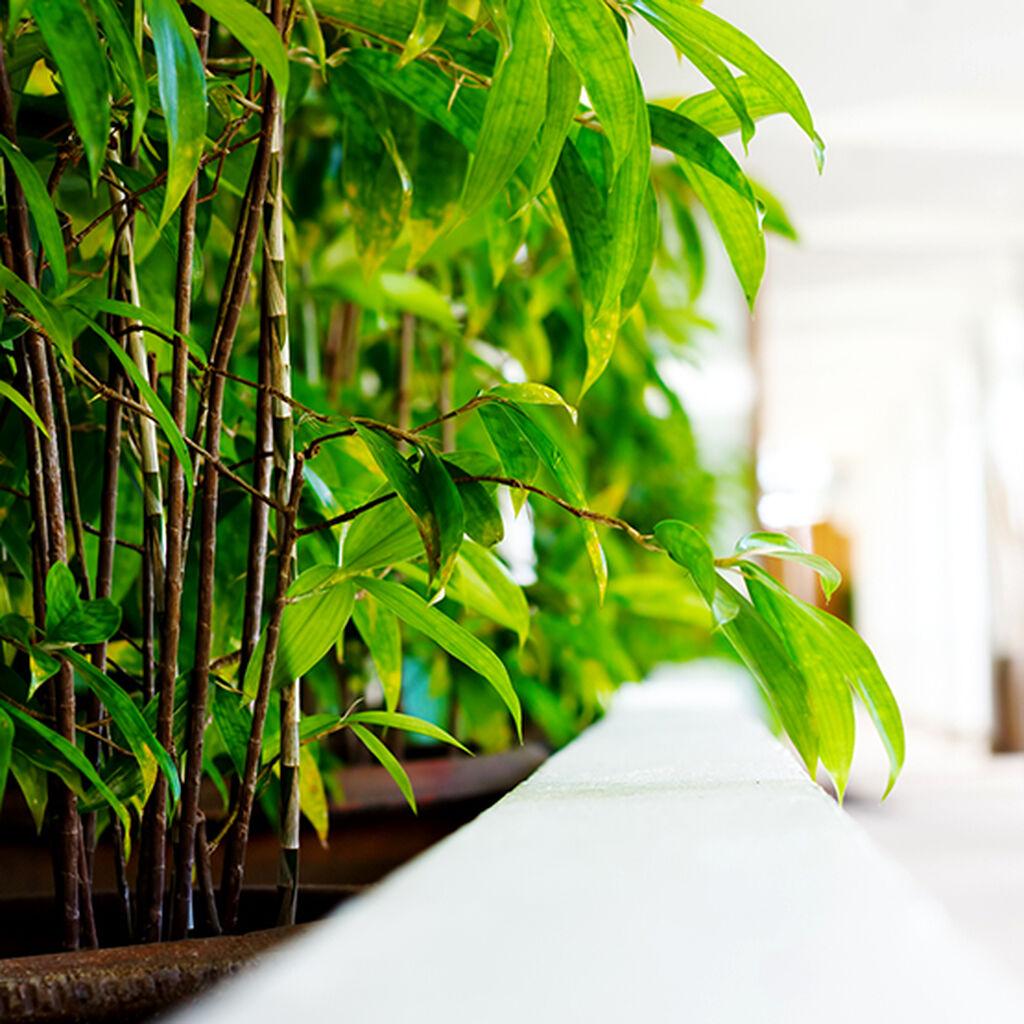 Bambu - Näin onnistut