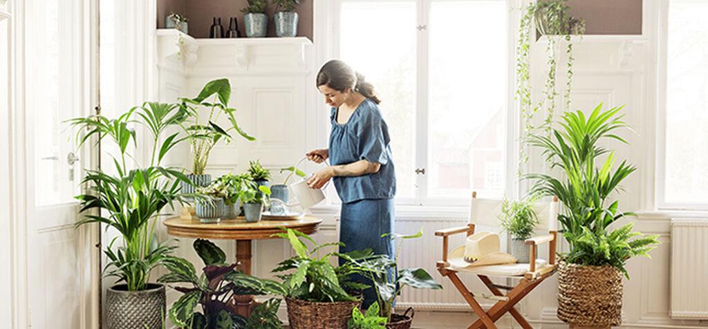 Vihersisusta sekä korkeilla että matalilla kasveilla