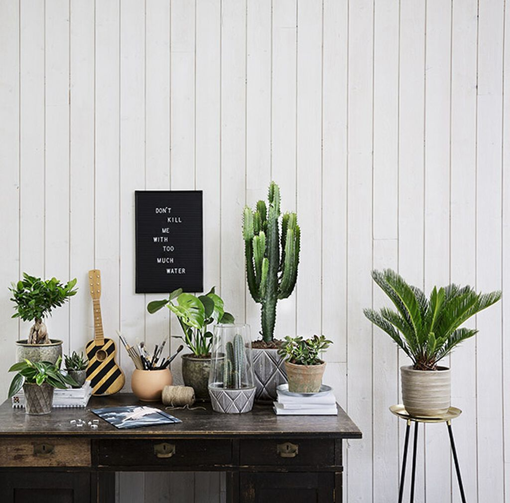 Suosituimmat, vähällä kastelulla pärjäävät kasvit.