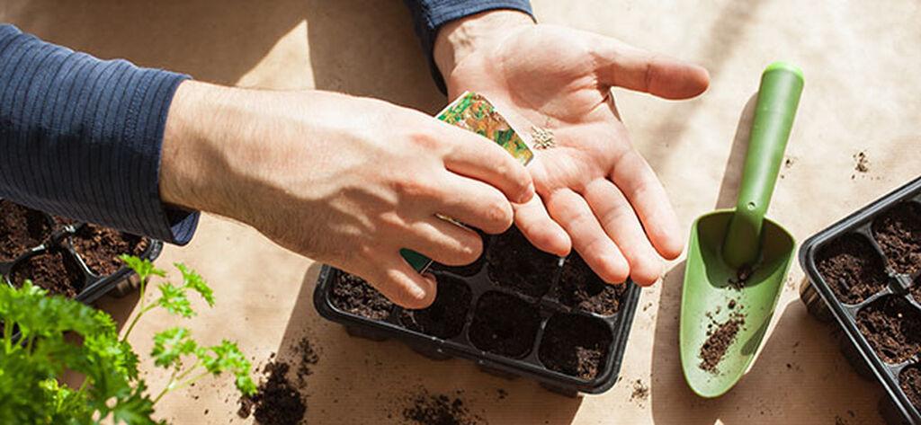 Kylvökoulu – taimien esikasvatus