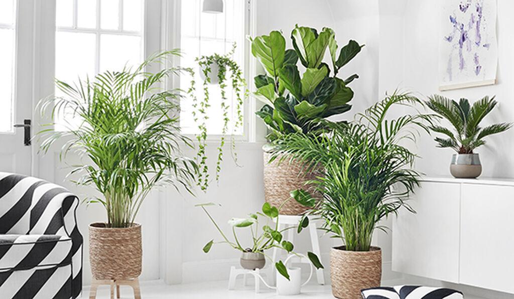 Ilmaa puhdistavat viherkasvit