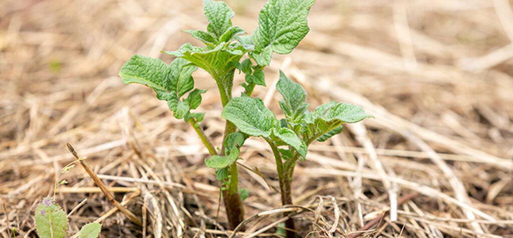 Kateviljely – helppo menetelmä, joka rikastuttaa maaperää