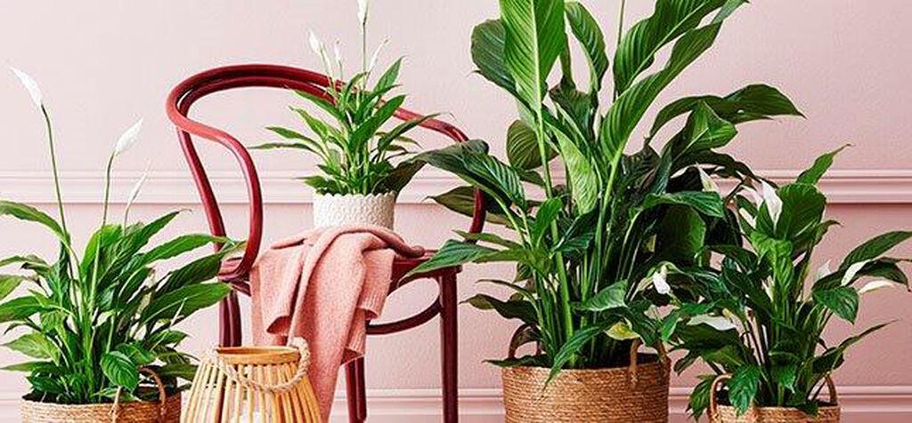 Kauteen sopivat kasvit – Limited Edition 2020