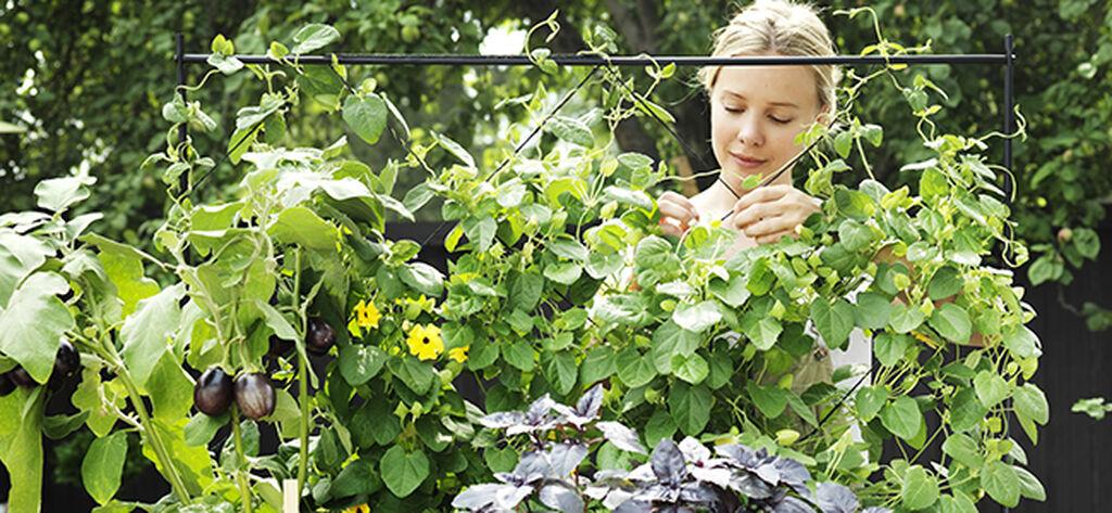 Aloita oma luomuviljely