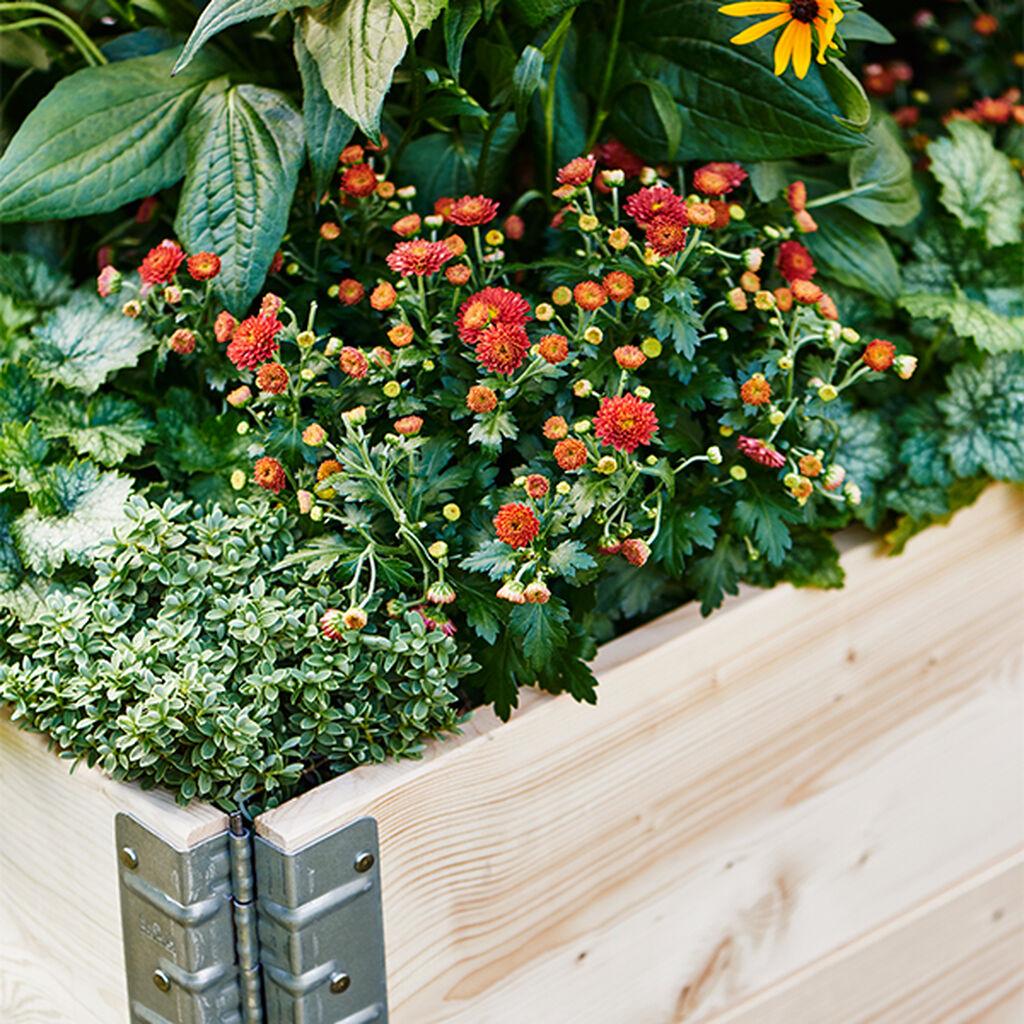 Istutuslaatikko ja viljely parvekkeella