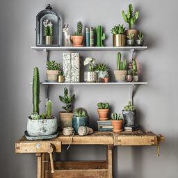 Kaktus – trendikäs ja helppohoitoinen