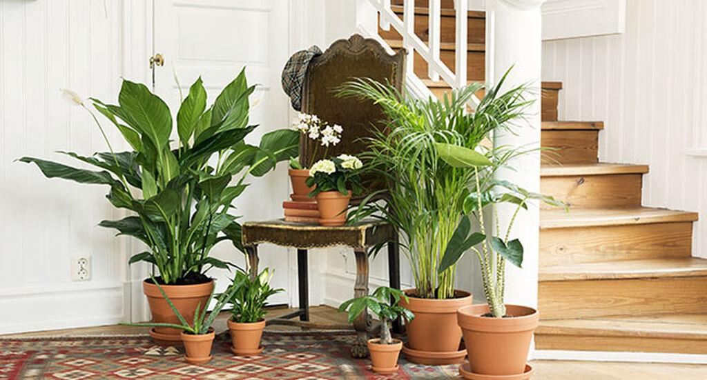 Sisusta erikokoisilla kasveilla