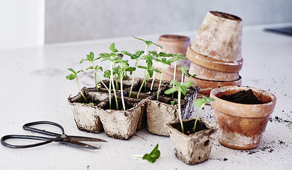 Maaliskuu – kylvä ja kasvata