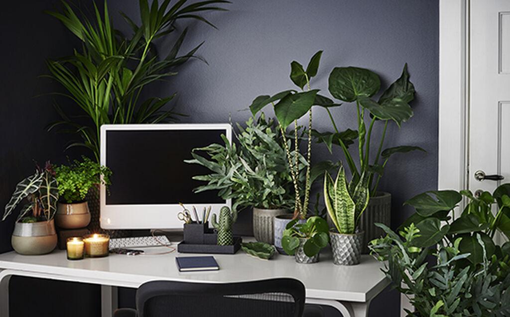 Vuoden 2019 trendikkäimmät huonekasvit