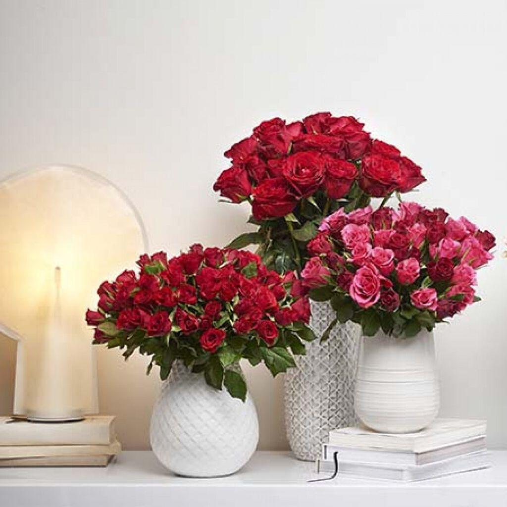 Plantagenin ruusut – viljelijältä myymälään