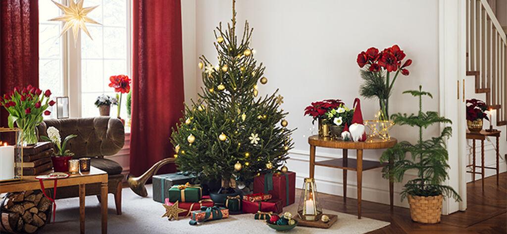 Joulukuu – tuo juhlatunnelman kotiin ja puutarhaan