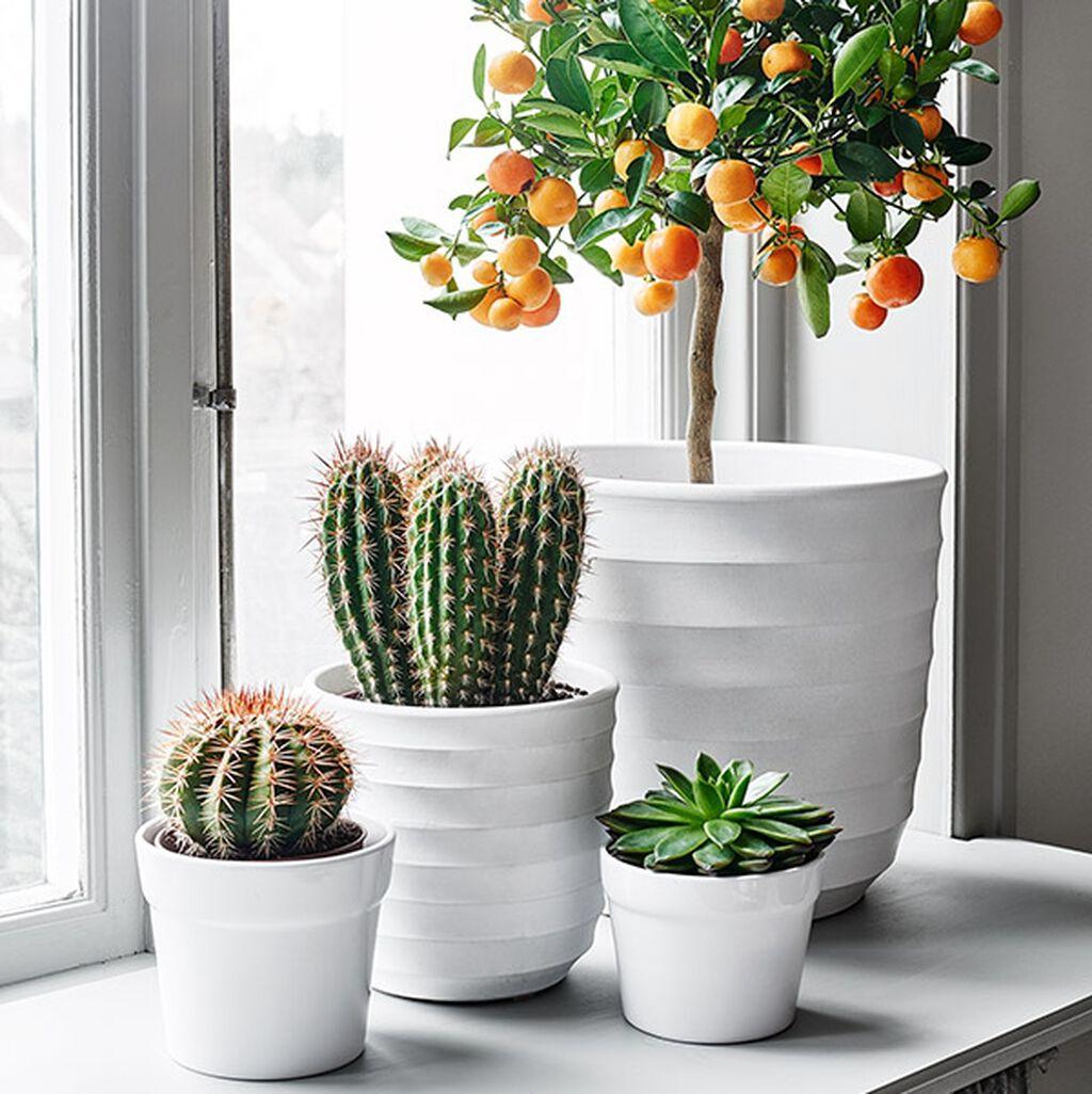 Ihania kasveja kaikille ikkunoille