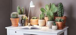 Kaktus – näin onnistut
