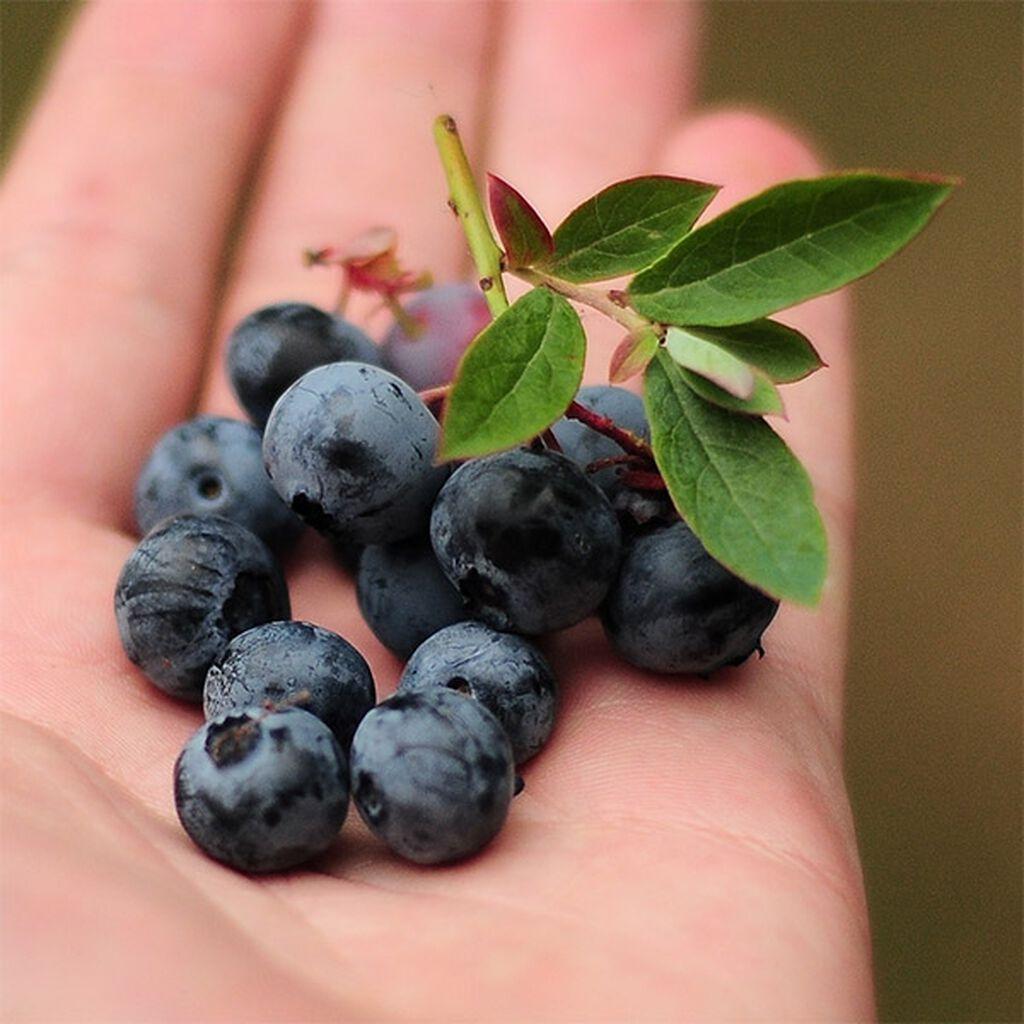 Vitamiinipitoista hedelmää ja marjaa, joita voit kasvattaa itse