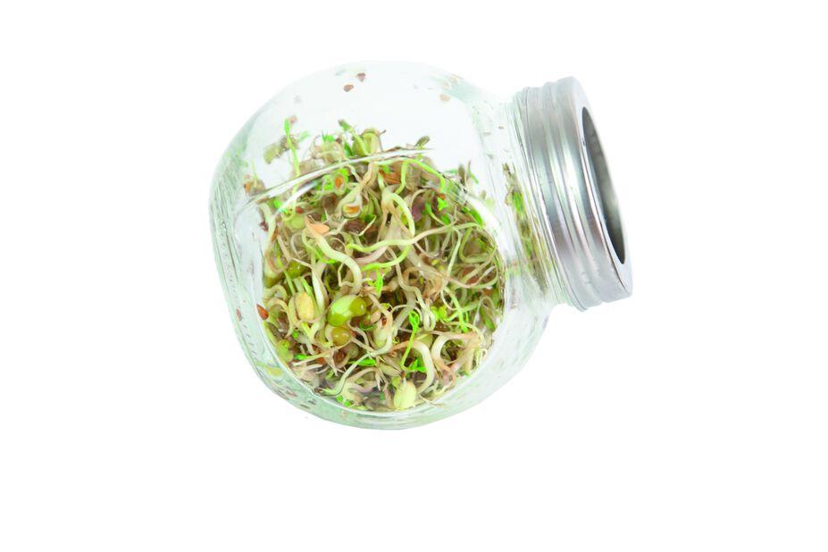 Idätyspurkki salaattisekoitus, Korkeus 11 cm, Monivärinen